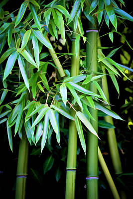 Photograph - Bamboo Trees II by Athena Mckinzie