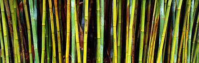 Bamboo Trees In A Botanical Garden Art Print by Panoramic Images