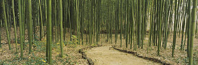Bamboo Trees On Both Sides Of A Path Art Print