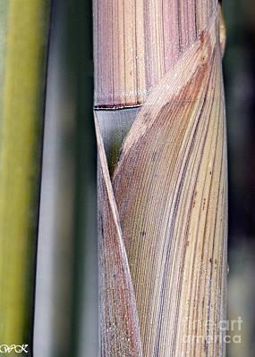 Photograph - Bamboo by Wanda Krack