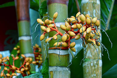 Bamboo With Berries Art Print