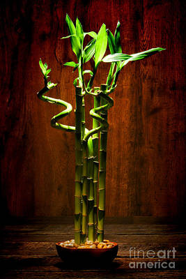 Photograph - Bambooesque  by Olivier Le Queinec