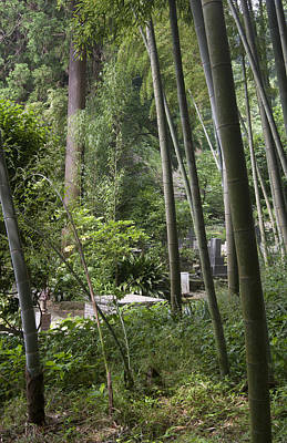 Photograph - Bamboos by Masami Iida