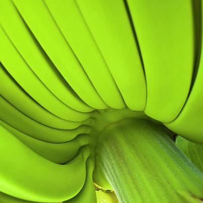 Banana Photograph - Banana Bunch by Heiko Koehrer-Wagner