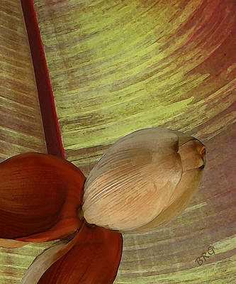 Photograph - Banana Composition I by Ben and Raisa Gertsberg