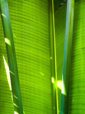Photograph - Banana Leaves 11 by Dawn Eshelman
