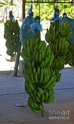 Photograph - banana plantation in Costa Rica 2 by Rudi Prott
