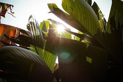 Photograph - Banana Sun by Jessica Brown