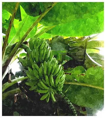 Fruit Tree Art Painting - Banana Trees by Lanjee Chee