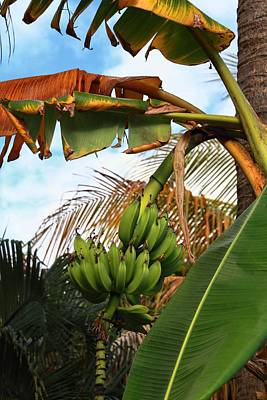 Photograph - Bananas by Bob Slitzan