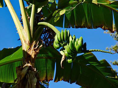 Photograph - Bananas by Jouko Lehto