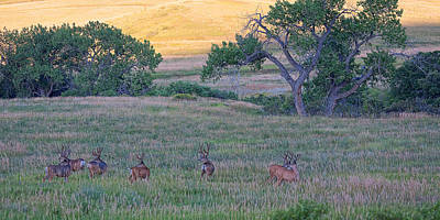 Mule Deer Herd Photograph - Band Of Brothers by Jim Garrison
