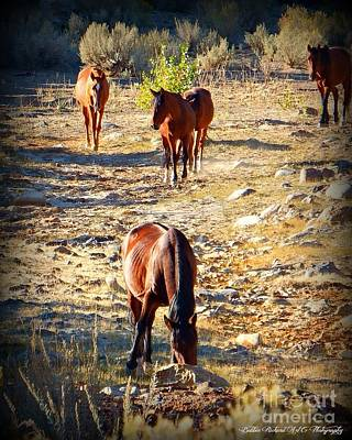 Photograph - Band Of Five by Bobbee Rickard