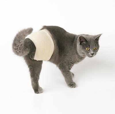 Bandaged Cat Art Print by John Daniels