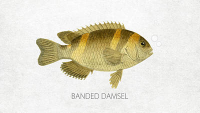 Fish Species Digital Art - Banded Damsel by Aged Pixel
