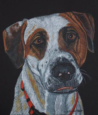 Drawing - Bandit - Pit Bull Mix Commission by Anita Putman
