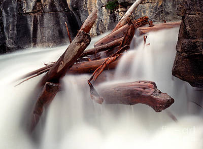 Photograph - Banff - Panther Falls Logs by Terry Elniski