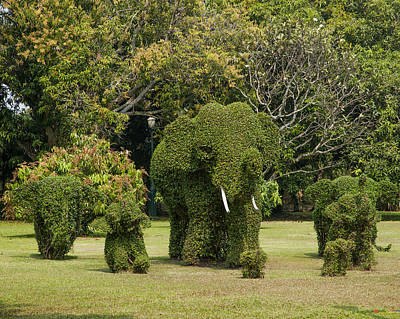 Photograph - Bang Pa-in Royal Palace Elephant Topiary Dtha0116 by Gerry Gantt