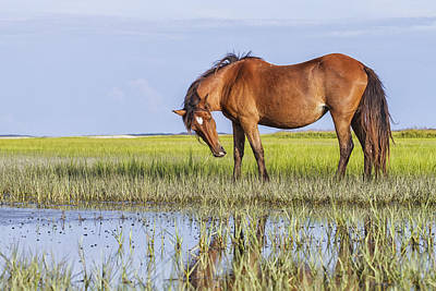 Photograph - Banker Horse On The Tidal Flats by Bob Decker