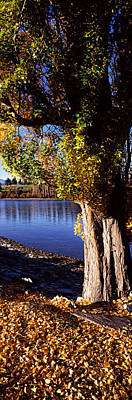 Fallen Leaf Photograph - Banks Of Lake Wakatipu, Queenstown by Panoramic Images