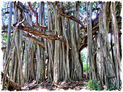 Photograph - Banyan 19 by Dawn Eshelman