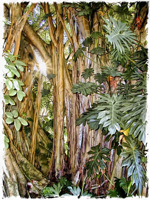 Photograph - Banyan 6 by Dawn Eshelman