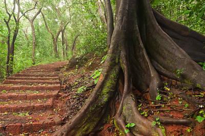 Banian Photograph - Banyan Buttress Roots Along A Matheran Trail by Scott Lenhart