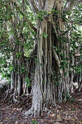 South Hutchinson Island Photograph - Banyan Graffiti No2 by Megan Dirsa-DuBois