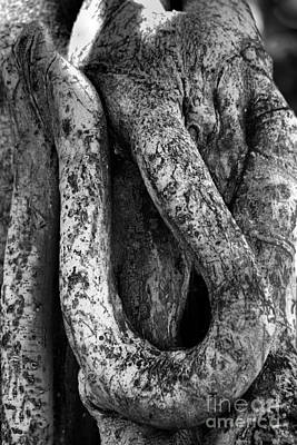 Landscape Photograph - Banyan Tree 6 by Denise Woldring