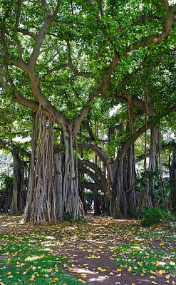 Photograph - Banyan Tree At Honolulu Zoo by Michele Myers