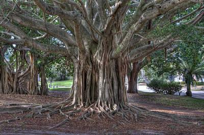 Venice Beach Photograph - Banyan Tree by Gerald Adams