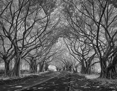 Banyan Tree Lined Road Art Print