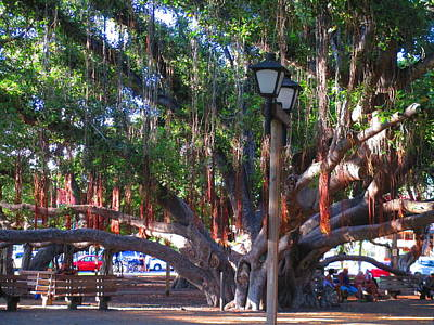 Fathers Day 1 - Banyan Tree of Maui by Elaine Haakenson