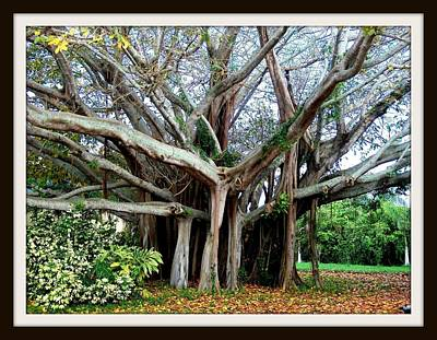 Photograph - Banyon Tree by Bruce Kessler