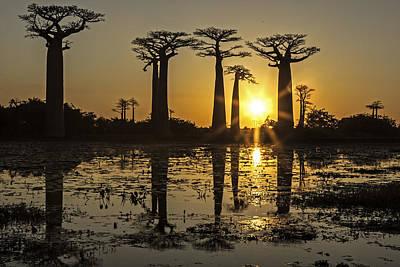 Art Print featuring the photograph Baobab Sunset by Judi Baker