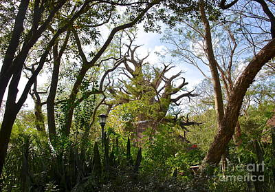 Photograph - Baobab Tree by Carol  Bradley