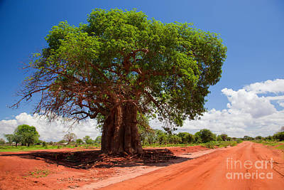 Plant Photograph - Baobab Tree On Red Soil Road by Michal Bednarek