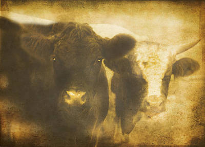 Digital Art - Vintage Bulls by Maggie Vlazny