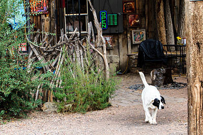 Photograph - Bar Dog by Ben Graham