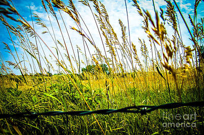 Blue Photograph - Barb Wire - High Res by Hannah Maria