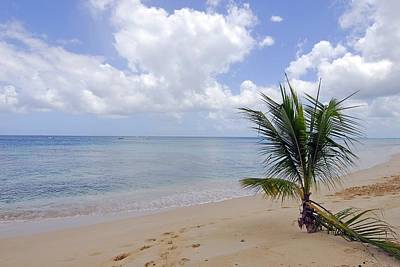 Photograph - Barbados Beach by Willie Harper