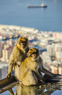 Photograph - Barbary Apes On A Rooftop by Deborah Smolinske