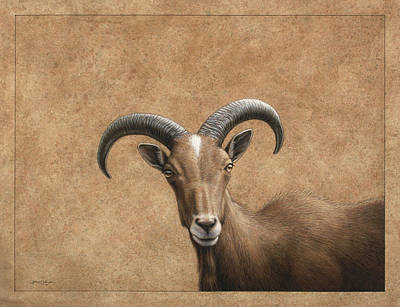 Wildlife Drawing - Barbary Ram by James W Johnson