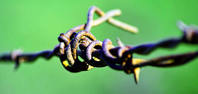 Photograph - Barbed Green by Holly Blunkall