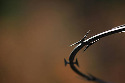 Metal Fence Photograph - Barbed by Karol Livote