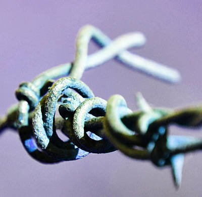 Photograph - Barbed Violet by Holly Blunkall