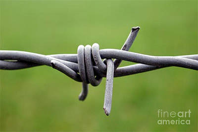 Photograph - Barbed by Vix Edwards