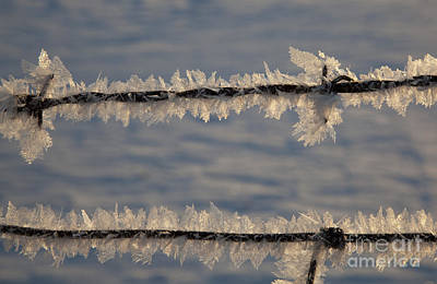 Photograph - Barbed Wire And Frost by Jim West