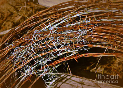 Photograph - Barbed Wire And Spanish Moss by Judi Bagwell