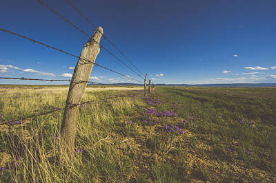 Photograph - Barbed Wire Fence And Flowers by Chelsea Stockton